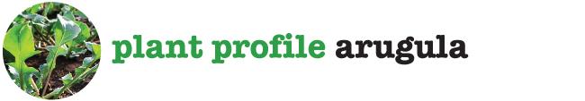 Plant Profile Arugula